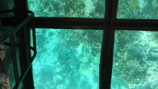 Molasses Reef: glass bottom boat view