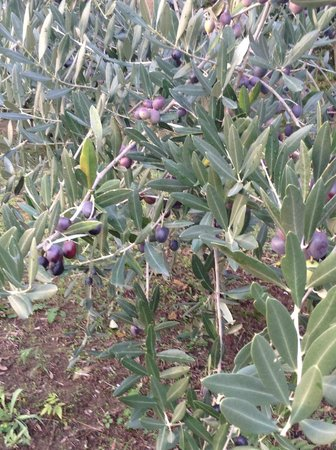Al Gelso Bianco Farm-Holiday Resort : Walking views
