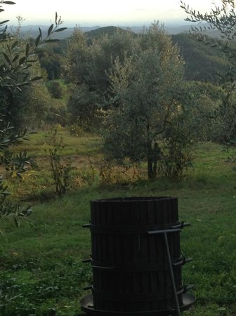 Al Gelso Bianco Farm-Holiday Resort : Just outside the cottage door