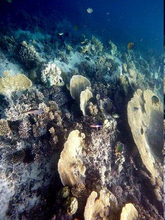 Angsana Ihuru : coral