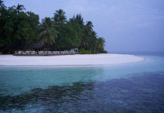 Angsana Ihuru : coral at dawn