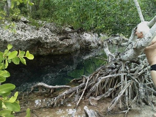 Ivette and Ronel's Casa Particular: Mangrove with tree roots