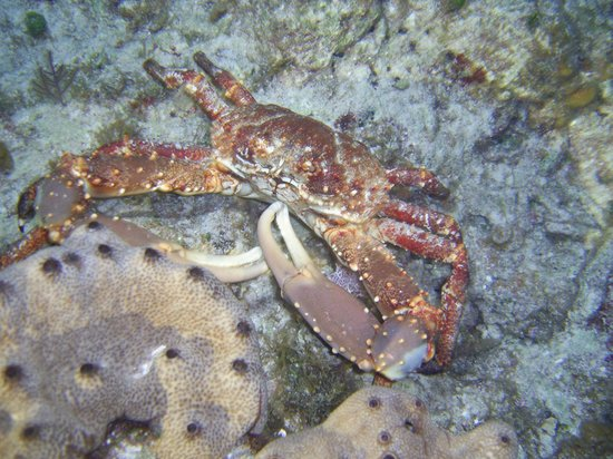 Ivette and Ronel's Casa Particular: A crab