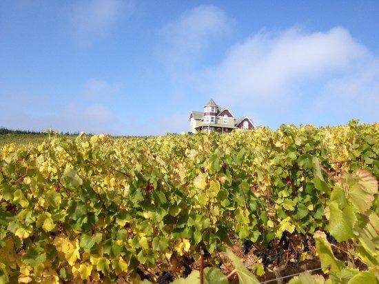 Trinity Vineyards: Vineyard Views