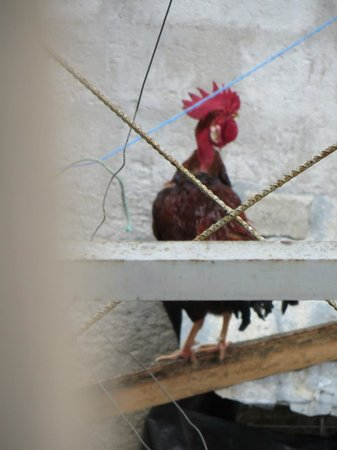 Hotel Kakchiquel: neighbor's rooster that calls starting at 2am