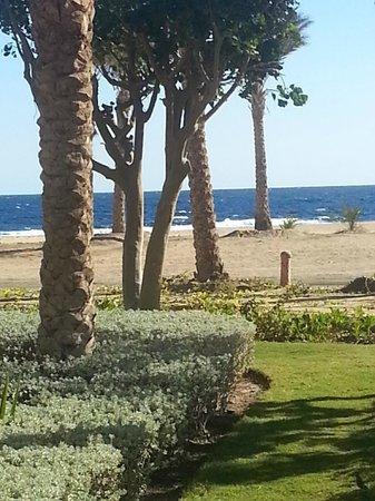 Siva Port Ghalib : palm trees