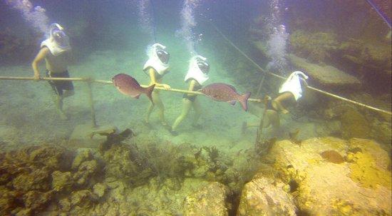 Coral World Ocean Park: sea trek