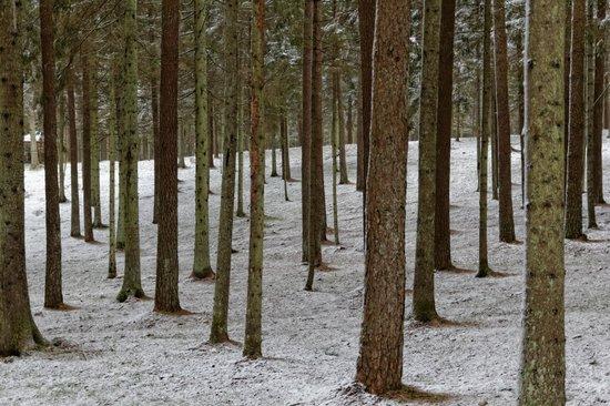 IDW Esperanza Resort: Forest surrounding the hotel