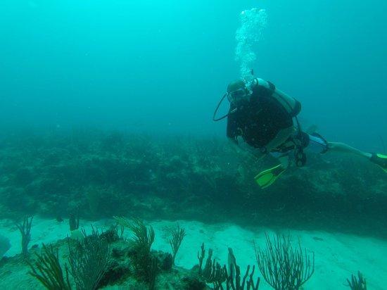 Carlisle Bay Antigua : Scuba Diving