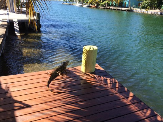A friendly visitor, the dock at Decked Out House