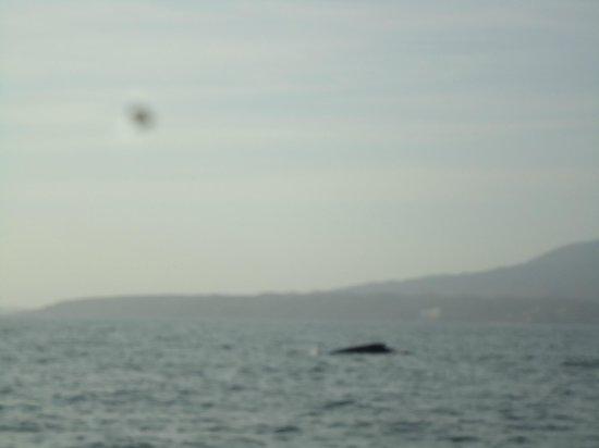 Hacienda Buenaventura Hotel & Mexican Charm All Inclusive: whale