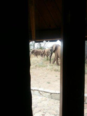 Tarangire Sopa Lodge: Elephants outside the window