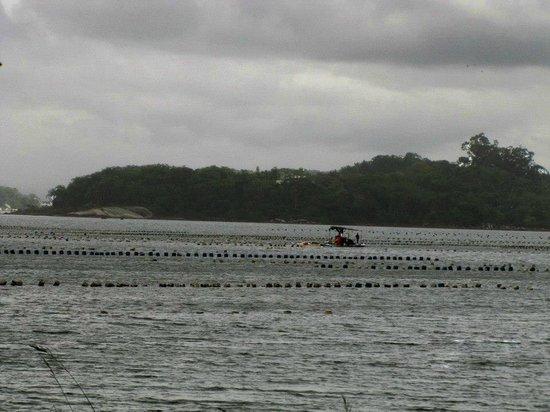 Ribeirao da Ilha: Cultivo de Mariscos
