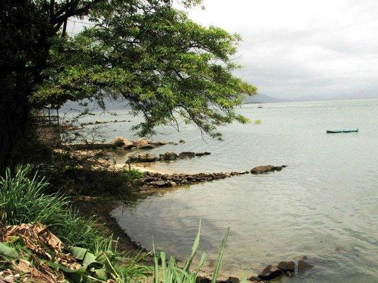 Ribeirao da Ilha: Vegetação da margem