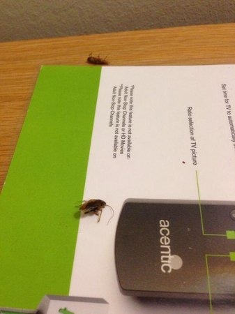 Holiday Inn London-Gatwick Airport: Cockroaches in room !!!