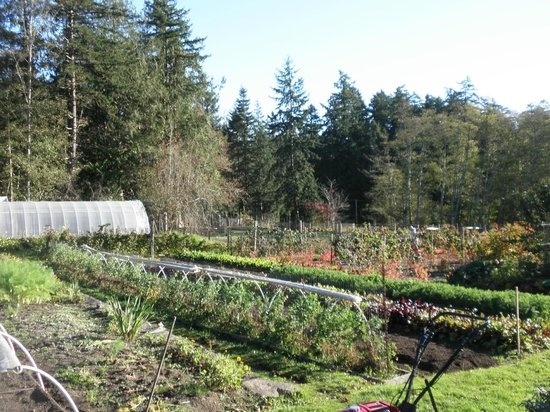 Harbour House Hotel: Organic farm
