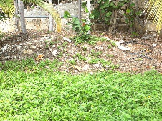 Hilton Curacao : Gepflegter Garten