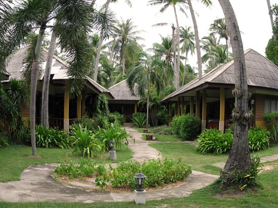 The Lipa Lovely Beach Resort : The bungalows.