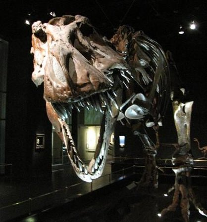 Royal Tyrrell Museum: t-rex