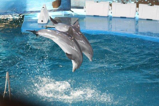 Dolphins Picture Of Barcelona Zoo Barcelona Tripadvisor