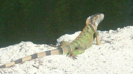 Hampton Inn Key Largo: Dont worry...they're vegetarian
