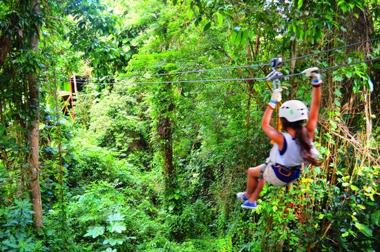 Rain Forest Zipline Corp.: Family zip line experience... Enjoy with the kids! Ziplining between trees.