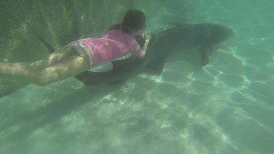 Bora Bora Lagoonarium: Snorkelling with shark - awesome!