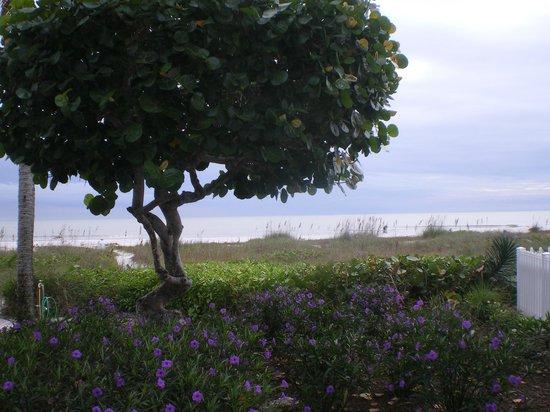 Ocean's Reach Condominiums: View from 2D1