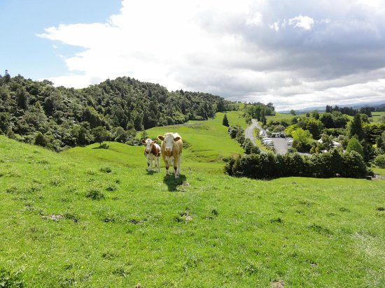 YHA Waitomo Juno Hall Backpackers: View from the grassland opposite