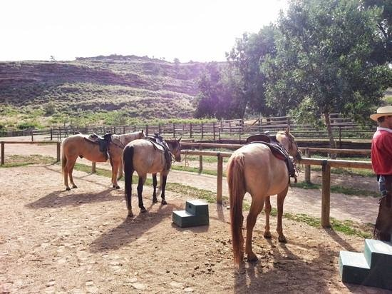 Sylvan Dale Guest Ranch: the horses for our ride