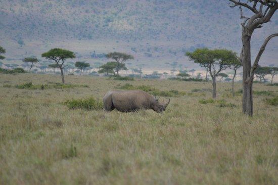 Governor's Camp: rhino