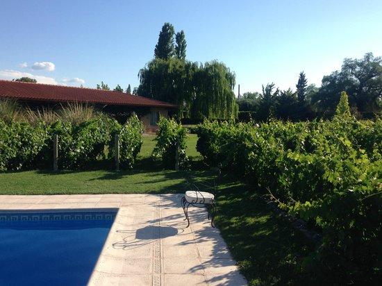 Posada Verde Oliva: pool and vines