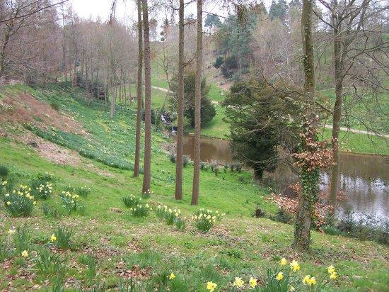 Hestercombe Gardens: Woodland walk