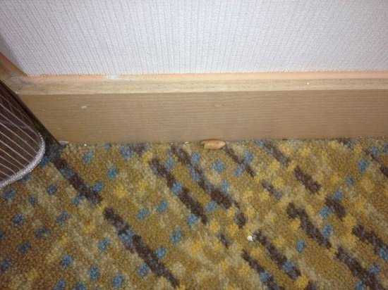 DoubleTree by Hilton Kuala Lumpur: Peanut, dirt at edge of carpet
