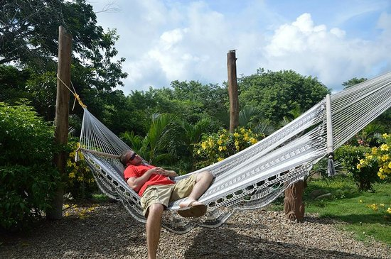 El Camino del Sol : Hammock and Landscaping around pool area