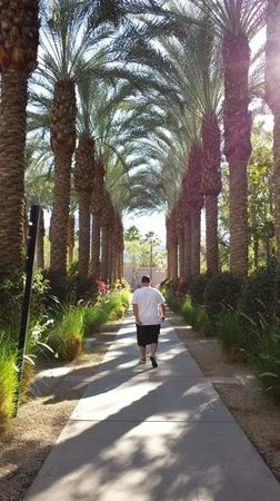 Hyatt Regency Indian Wells Resort & Spa : palm trees