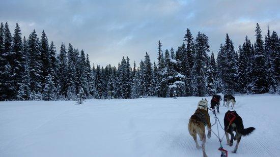 Kingmik Dog Sled Tours: Scenic view