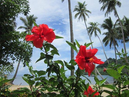 Lalati Resort & Spa: More flowers