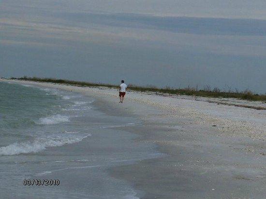 Captain Randys Fishy Business: Cayo Costa gorgeous beach ....