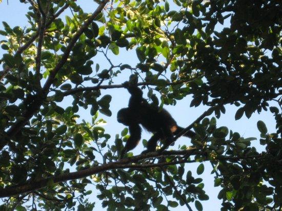 Sandos Playacar Beach Resort : monkeys