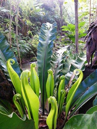 Proud Phu Fah Resort: The resort gardens