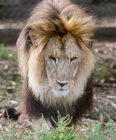 Serenity Springs Wildlife Center: strong