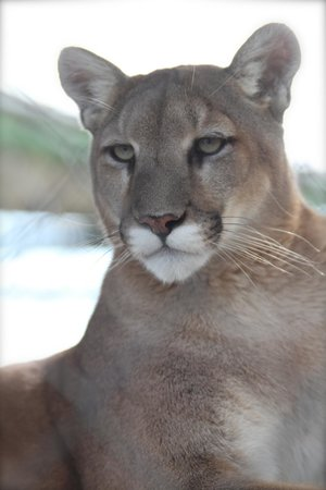 Serenity Springs Wildlife Center: Amazing