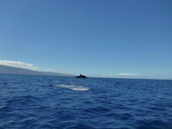 Pacific Whale Foundation: Pack of 100 spinner dolphin.
