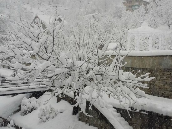 Manuallaya -The Resort Spa in the Himalayas: Apple tree in Snow. Pic taken from the room balcony