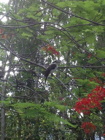 Palm Bungalows: View of a kookaburra from the terrace