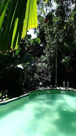 Daintree Wilderness Lodge: Nice swimming pool