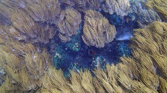 Ocean Safari: Huge Tridacna Clam