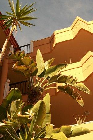 Ereza Dorado Suites Hotel : l'hotel vu de la piscine