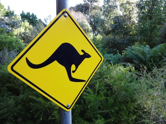 Ventnor Botanic Garden: Australian zone